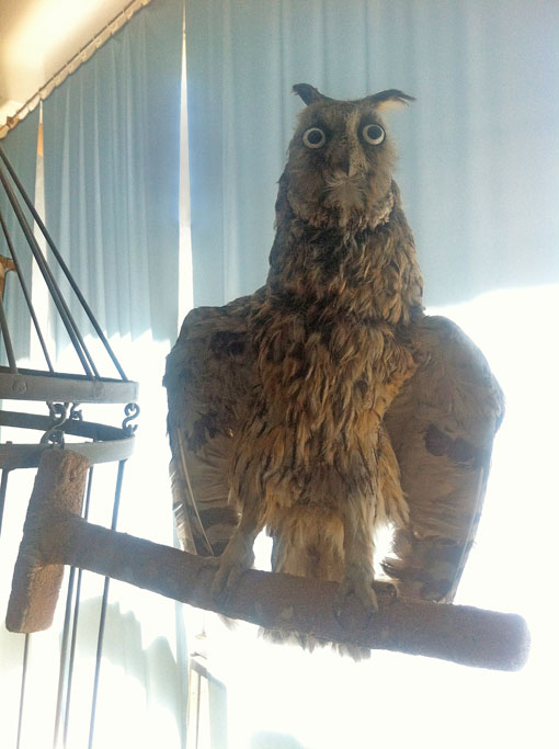Owl, photo taxidermy kyrgistan