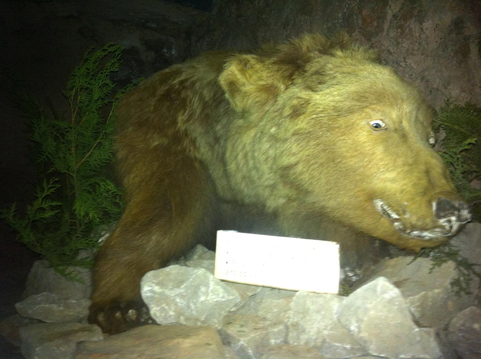 bear taxidermy photo