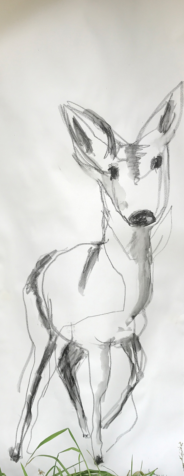 deer art drawing