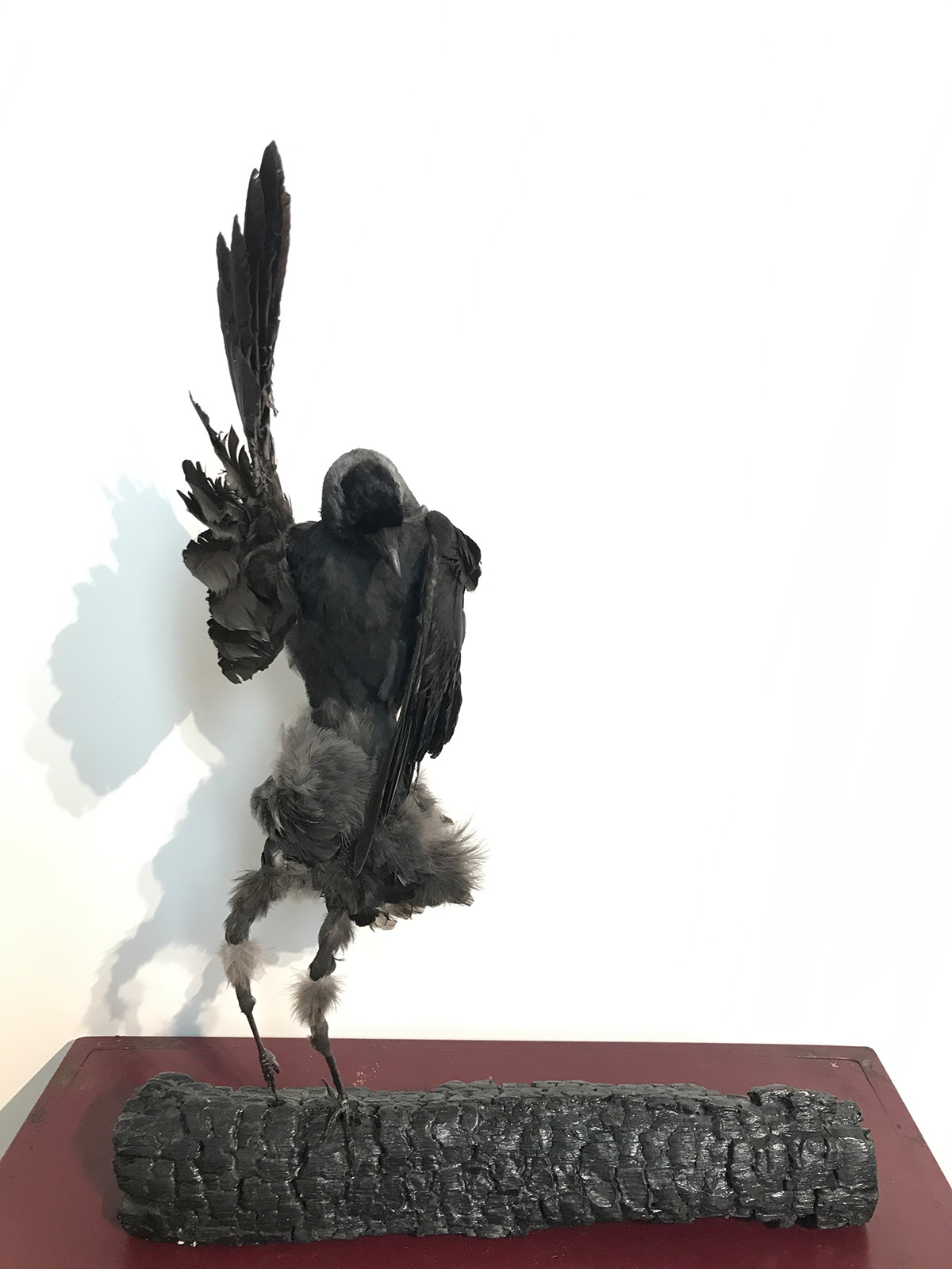 taxidermy art jackdaw girl