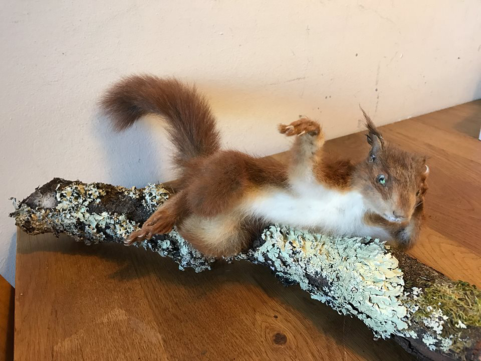 taxidermy squirrel odalisque