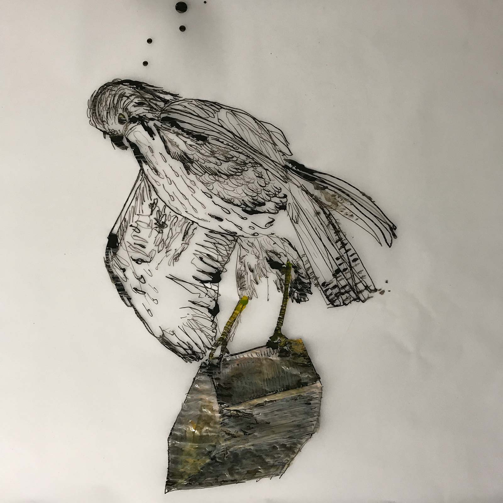 Moving buzzard art drawing