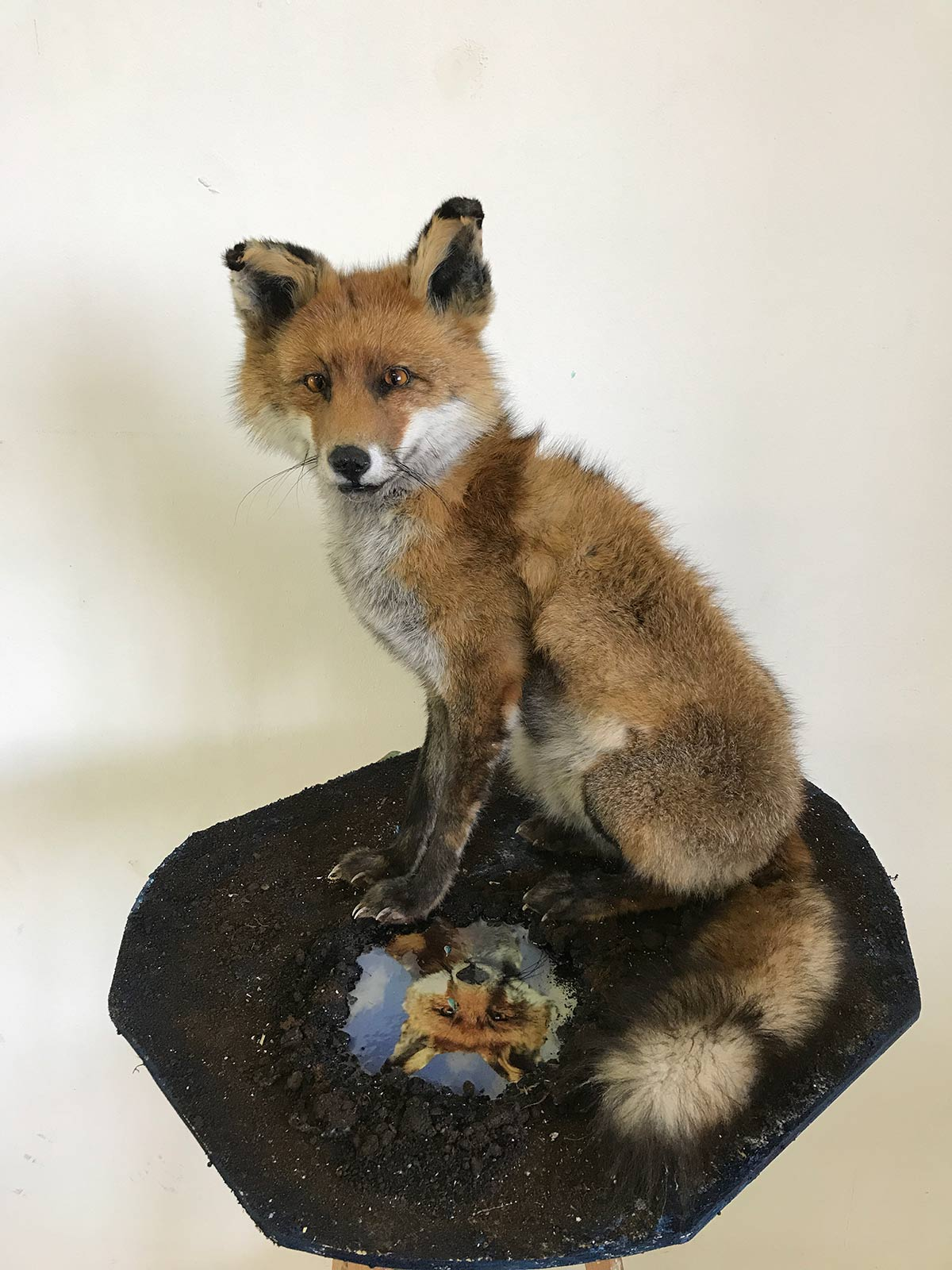 taxidermy art fox