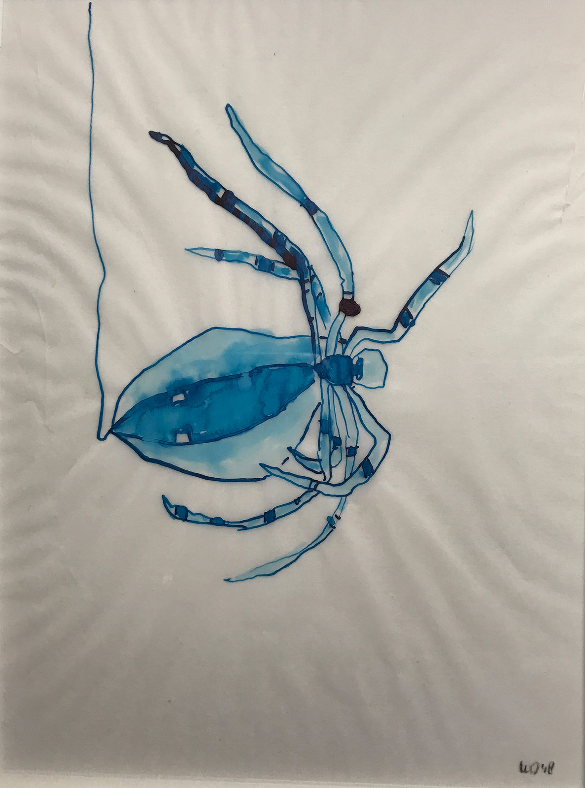 drawing art spider ink blue